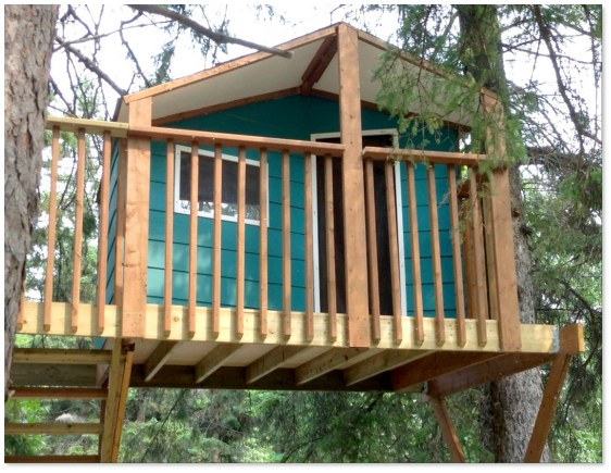 Zelkova treehouse with blue panels and ladder
